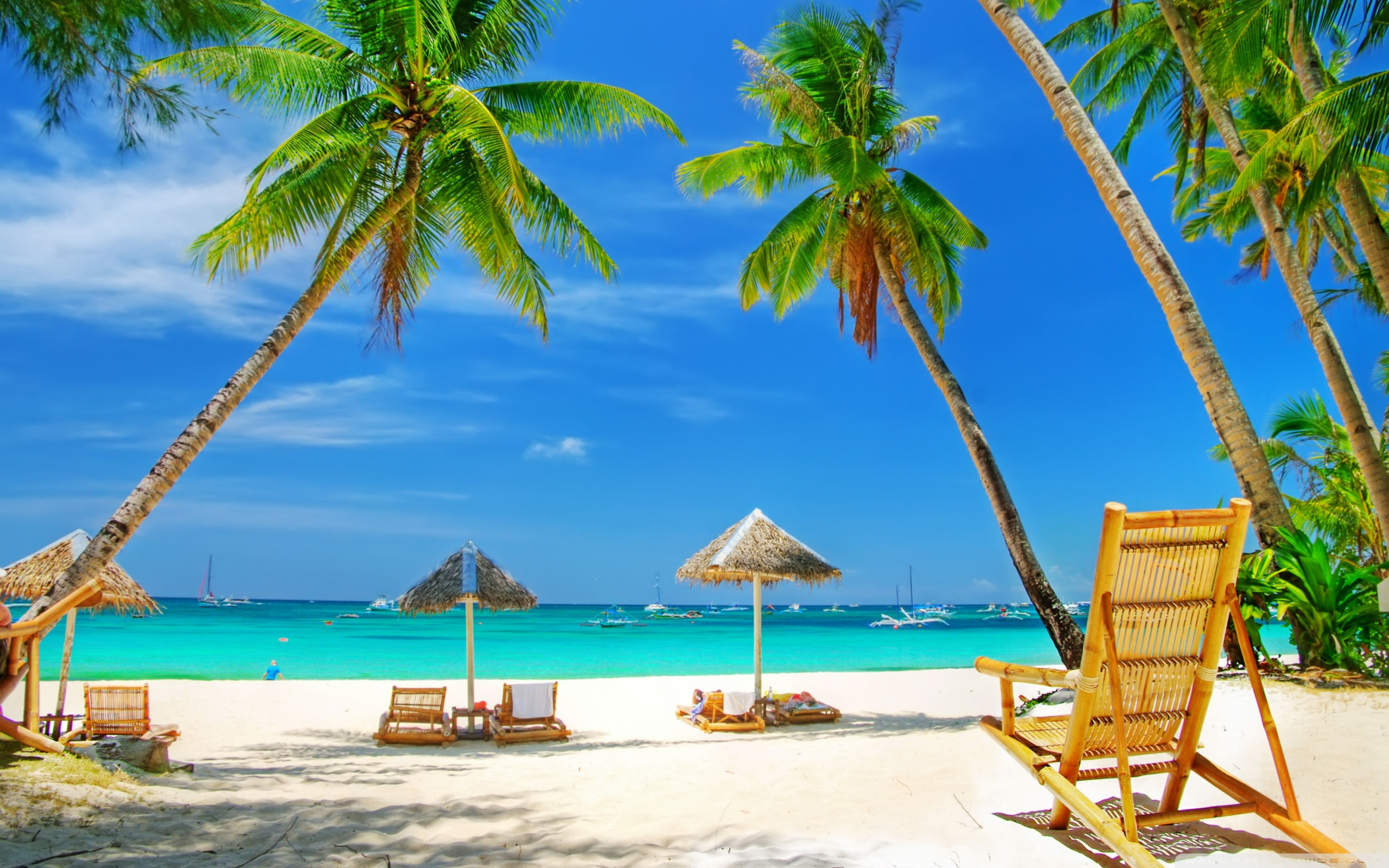 tropical_paradise_beach-wallpaper-2560x1600